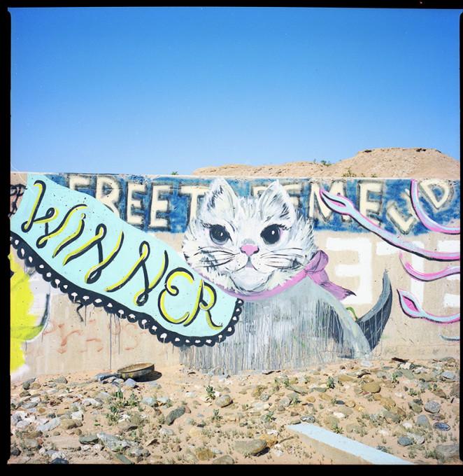 cat_winner