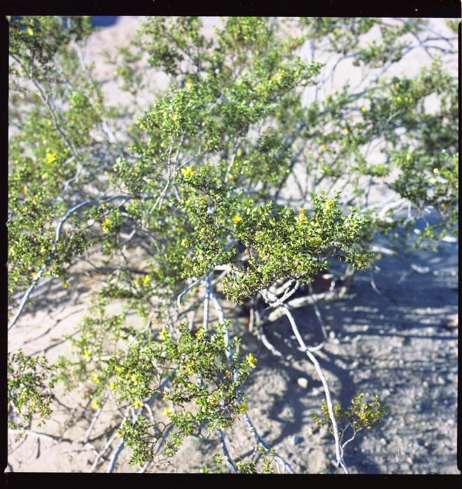 Salton Sea062