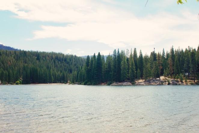 giant_sequoias 223