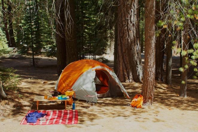 giant_sequoias 227