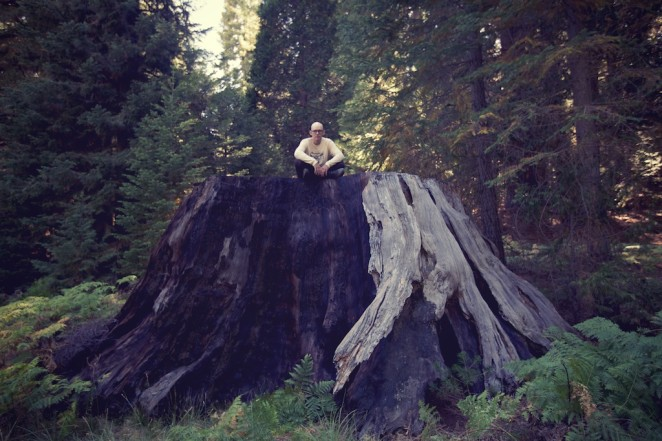 giant_sequoias 231