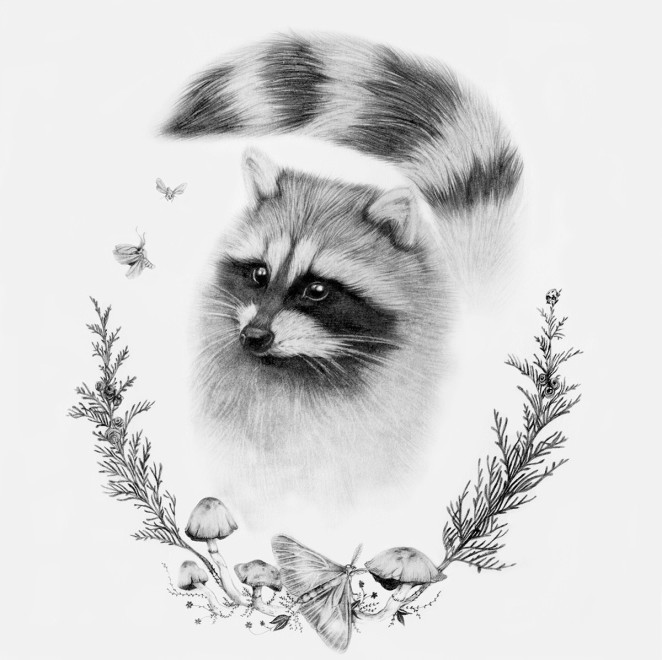 raccoon_burrowinghome