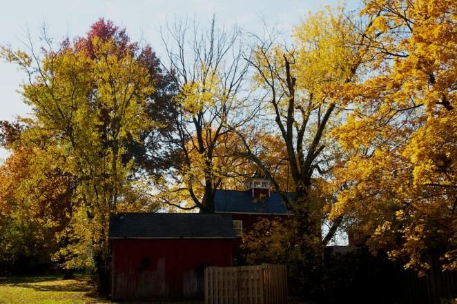 autumn east 227
