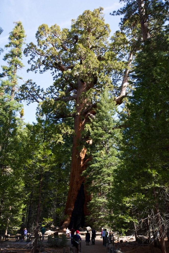 yosemite mariposa grove giant sequoias 16