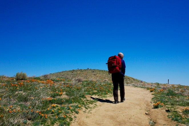 california poppy reserve 5