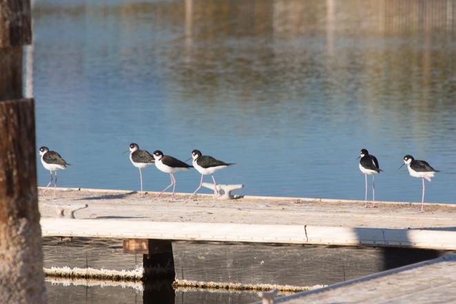 birds-1-2